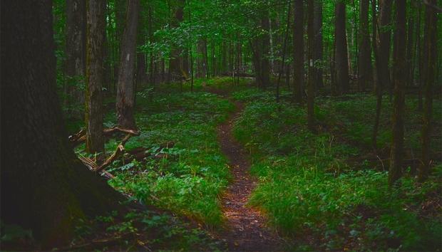 florest floor