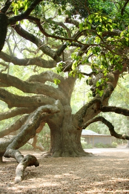 climbing tree.jpg